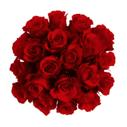 100-red-roses