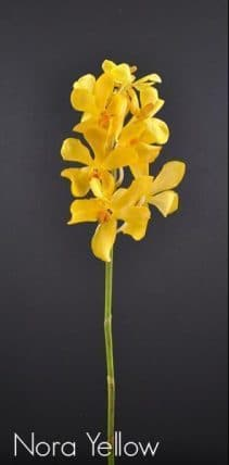 293816276 - Fresh Cut Orchids Orchids Mokara Nora Yellow (60 stems)