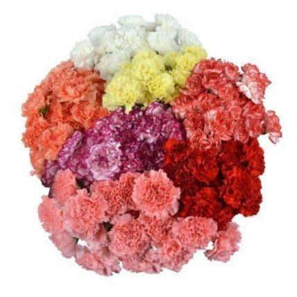 350 Carnation Flower