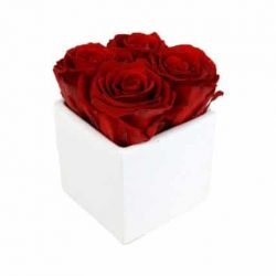 4 Red Preserved Roses in White Ceramic Cube
