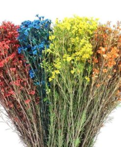 wax flower archives jr roses wholesale flowers