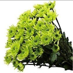 green pom pom flowers
