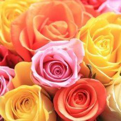 Assorted bulk Roses