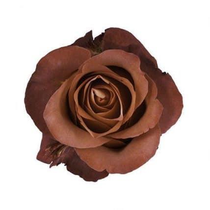 Brown Terracotta Flowers