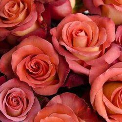 earth-tone-roses