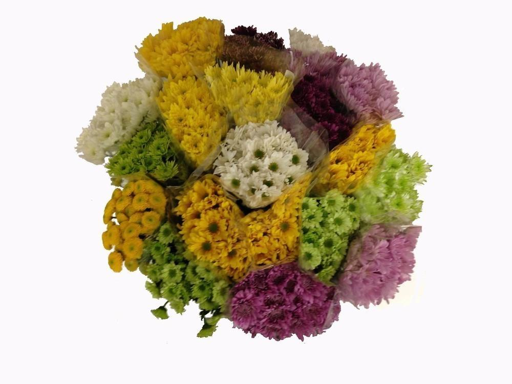 Daisy Novelty Pompoms - Cushion, Daisy and Novelty Poms 12 bunches