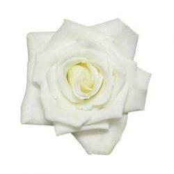 Ecimo Rose