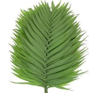 emerald leaves