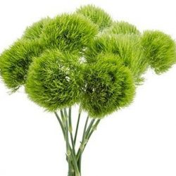 Green-Ball-dianthus