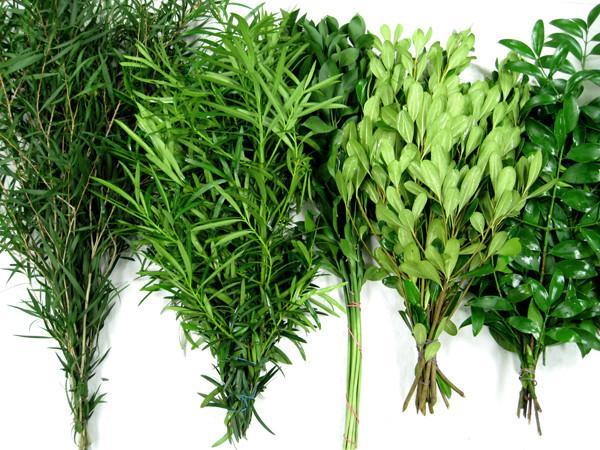Green Basic Mix Foliage