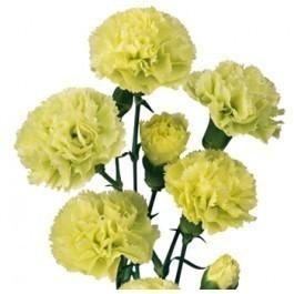 Green Mini Carnations