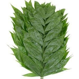 Jade leaf