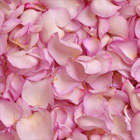 Lavender Rose Petals