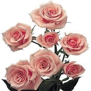 Light Pink Spray Roses