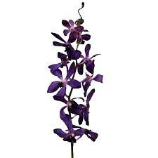 Mokara Purple Orchid