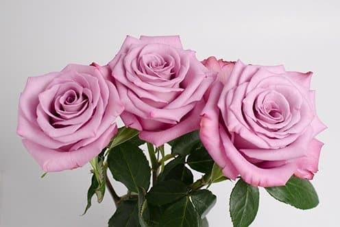 Moody-Blues-roses