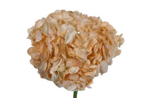 Peach Hydrangea flower