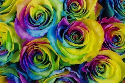 Rainbow-Tinted-roses