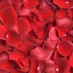 red-rose-petals