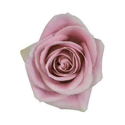 Rosita Vandela Pink Roses