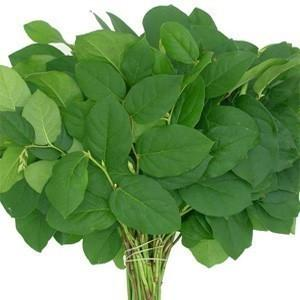 Sala Tips Lemon Leaf Foliage