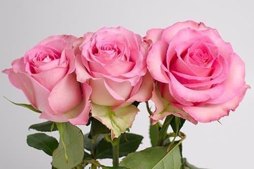 Sweet-Unique-roses