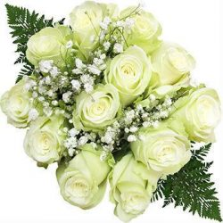 white-dozen-roses