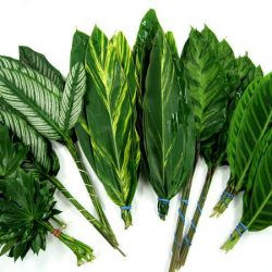 Tropical Fun Mix Foliage