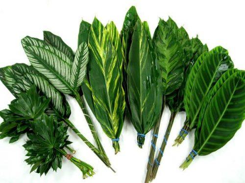 Tropical Fun Mix Foliage