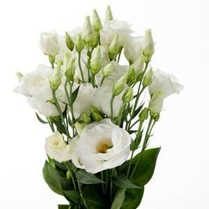 White lisianthus bulk flowers j r roses wholesale flowers mightylinksfo