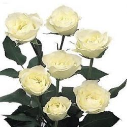 White Spray Roses