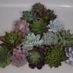 assorted succulent