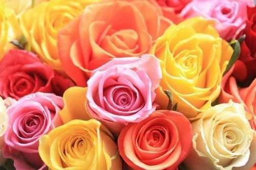 assorted wholesale roses