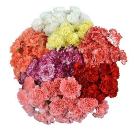 assorted-carnation