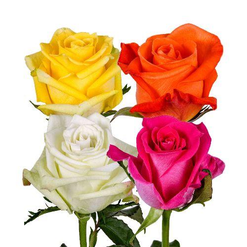 bulk-roses