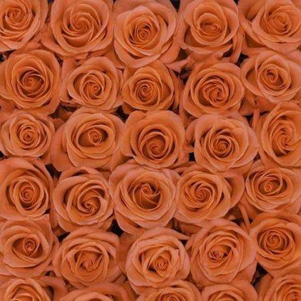 bulk coral roses - 100 Coral Roses