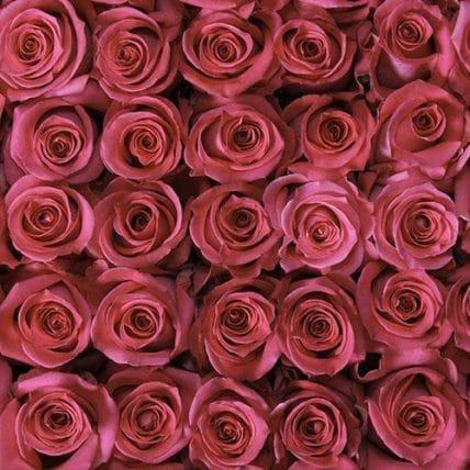 bulk hot pink roses - 100 Hot Pink Roses