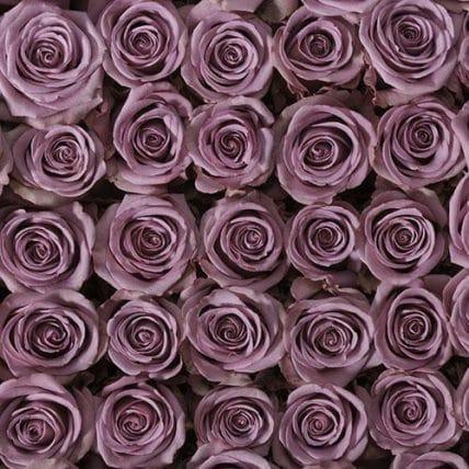 bulk lavender roses - 100 Lavender Roses Wholesale Bulk