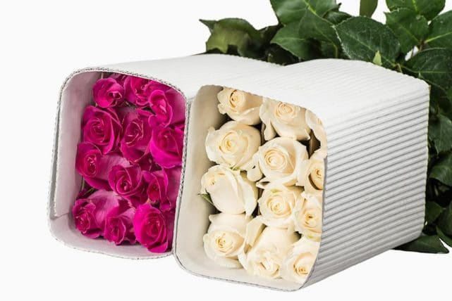 bunches of roses - 1,000 Roses in Assorted Color Wholesale Bulk