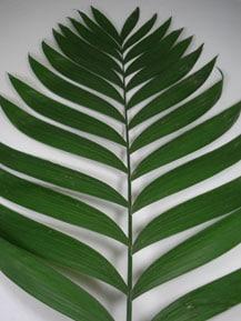 emerald leaf