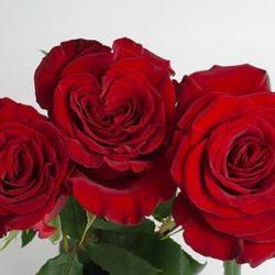 garden-roses-Hearts