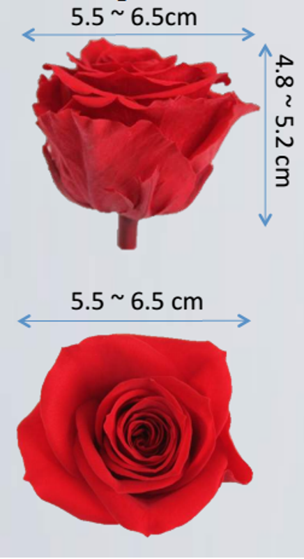 large size preserved rose heads ebay - Preserved Roses Box of 6 Heads