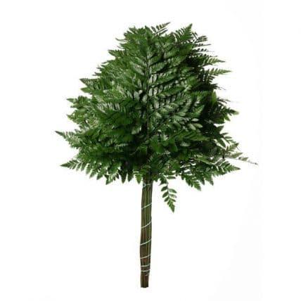 leather leaf baker fern