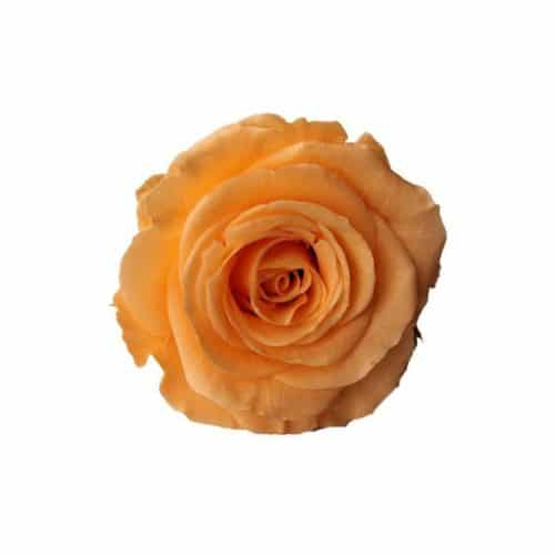 peach preserved rose
