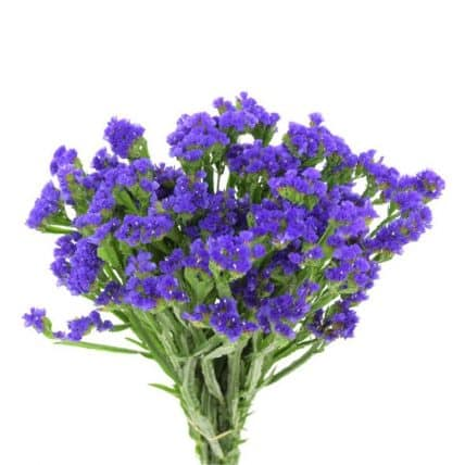 purple statice flower