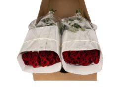 bulk red roses