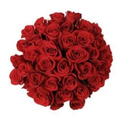 wholesale red roses