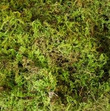 sheet-moss-fresh