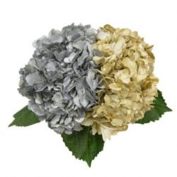 silver-and-gold-hydrangea