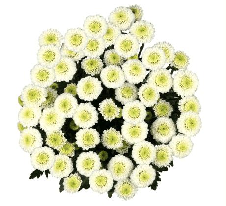 white button flower